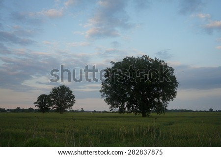 Trees on a farmers field - stock photo