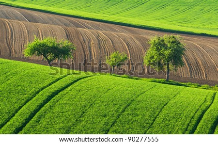 Trees on a green field - stock photo