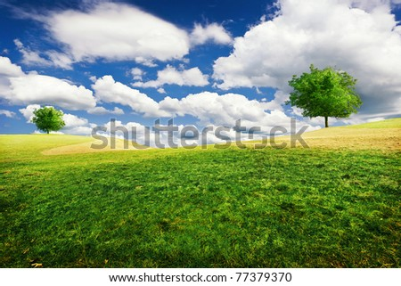 Trees on a hill - stock photo