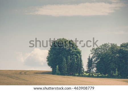 Trees on a rural field with golden grain