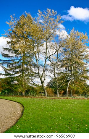 trees on a summers day standing in the background against a blue sky and white fluffy clouds, with a lush green lawn and a gravel path leading away towards them. - stock photo