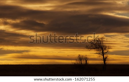 Trees on a sunset sky - stock photo
