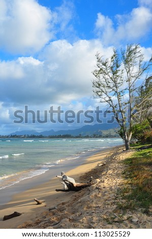 Trees on a windy tropical coast - stock photo