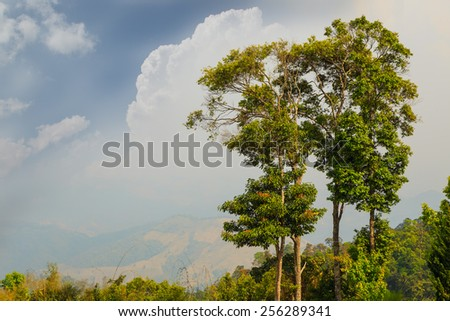 Trees on high mountain , cloud and sky - stock photo