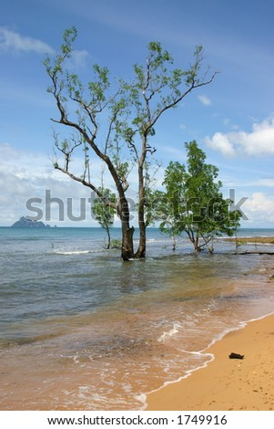 Trees on Malaysian beach front