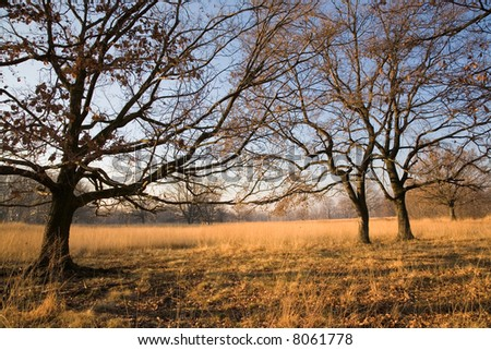Trees on meadow; clear blue sky on background