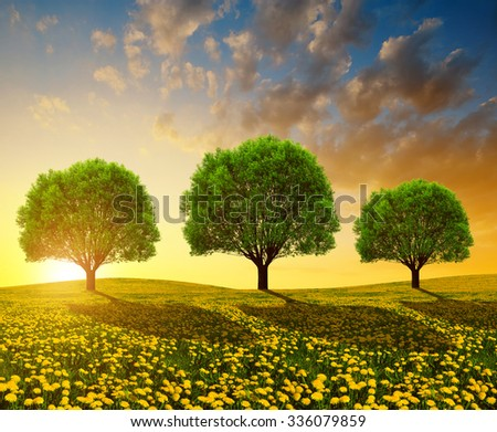 Trees on meadow with dandelions at sunset. Spring landscape. - stock photo