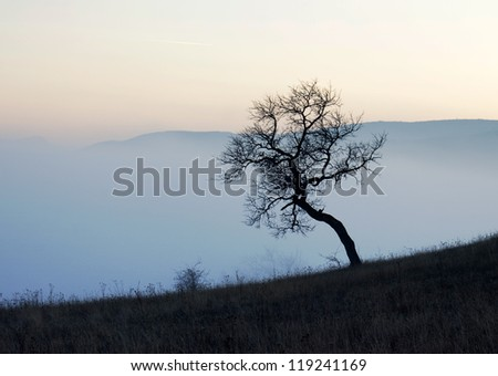 Trees on misty autumn sunset - stock photo