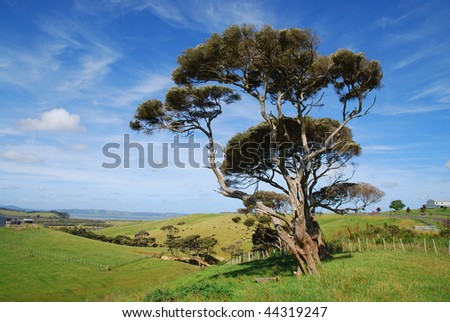 Trees on rolling farmland in New Zealand - stock photo