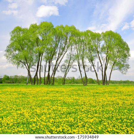 Trees on spring meadow with dandelions  - stock photo