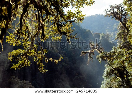 Trees on the background with the rainforest Himalayas mountain NEPAL - stock photo