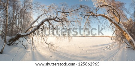 Trees on the bank of the frozen winter lake. A natural background