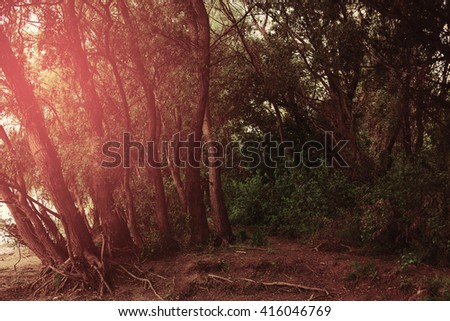 Trees on the bank of the river - stock photo