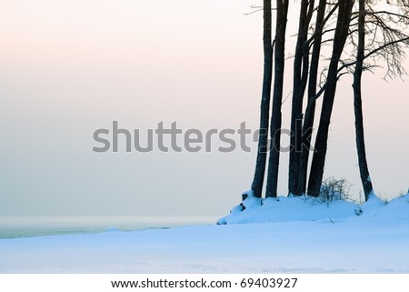 trees on the beach in winter against the sea of pastel colors - stock photo