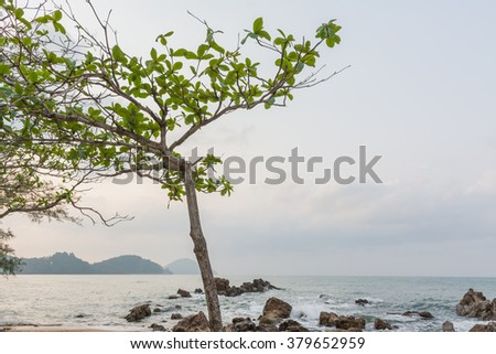 Trees on the beach of sea