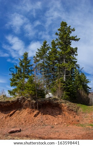 Trees on the brink - erosion of red cliffs - stock photo