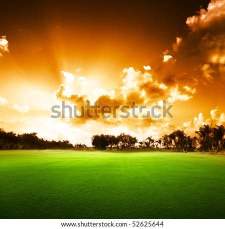 trees on the field of grass and sunset - stock photo