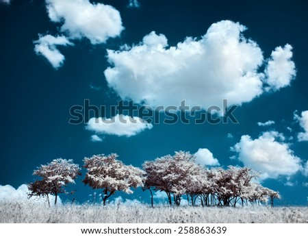Trees on the hill and cumulus clouds, infrared (IR) landscape - stock photo