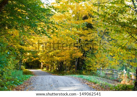 Trees overhanging this country road filled with golden autumn leaves.