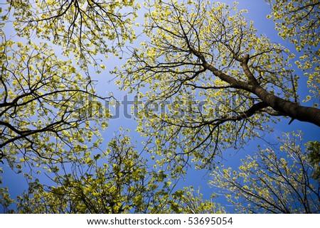 Trees overhead - stock photo