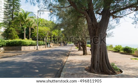 Trees planted along the streets by the shore of the Indian Ocean in Maputo, Mozambique