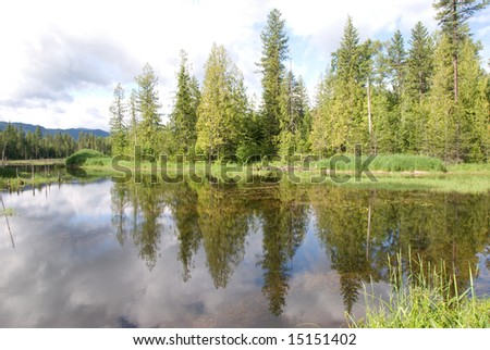 Trees reflecting in mountain lake