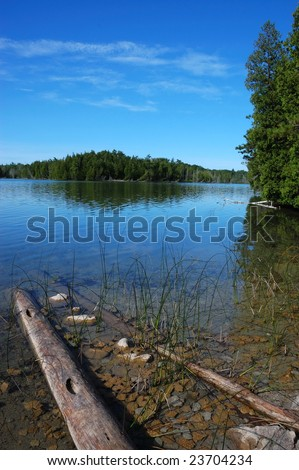 Trees reflection in lake, with dead logs - stock photo