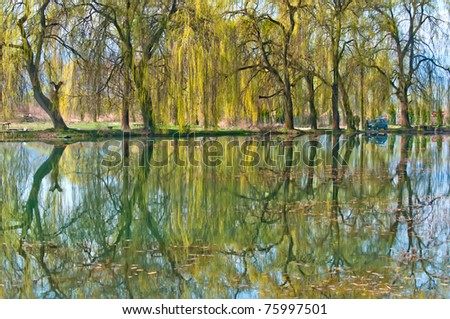 trees reflexion into the water