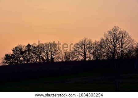 trees silhouetted against a pink sunset