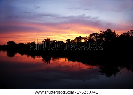 trees silhouetted against the sunset - stock photo
