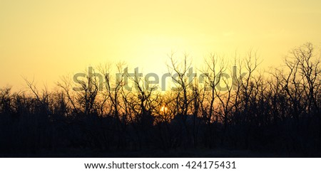 Trees silhouettes against sunset background - stock photo