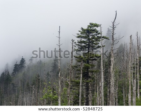 Trees, Snags, and Fog, Clingmans Dome, Great Smoky Mountains NP - stock photo