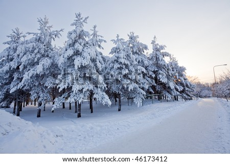 Trees snow and road at sunrise - stock photo