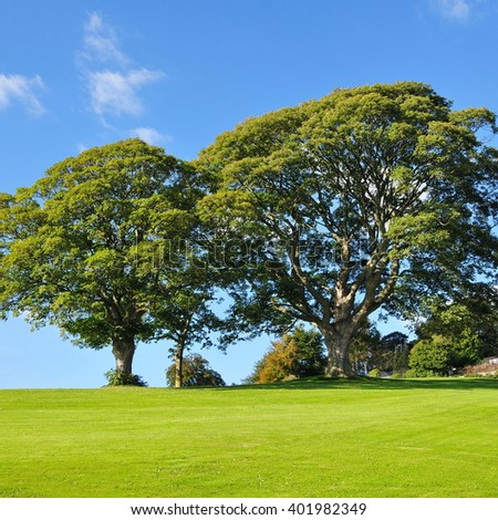 Trees Stand a Peaceful Green Garden - stock photo