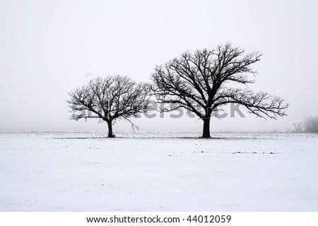 Trees standing on the remote snow covered field