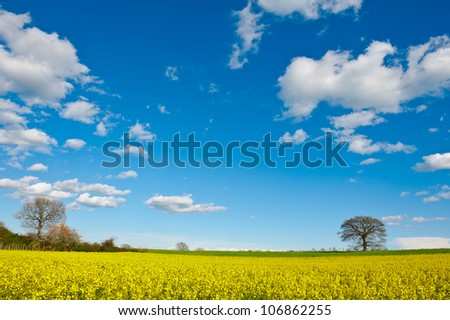 Trees Surrounded by Sloping Meadows of Tuscany, Italy
