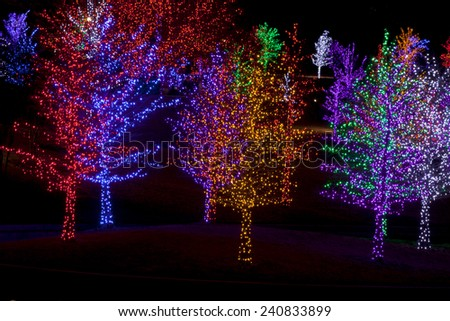 Trees tightly wrapped in LED lights for the Christmas holidays. Each tree is wrapped in one color. - stock photo