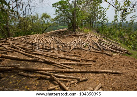 Trees trunk on filed on a land on sale in Costa Rica - stock photo