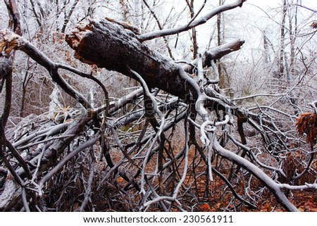 Trees under the weight of winter ice  - stock photo