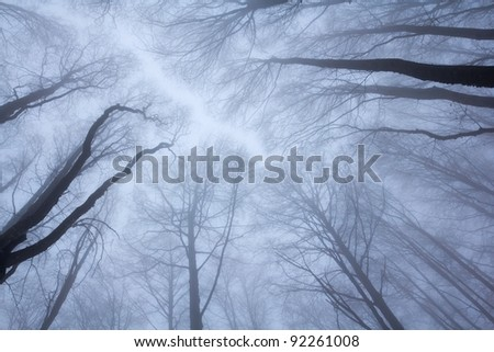 trees uplifted high in a mist - stock photo