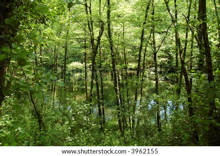 Trees, vegetation and Leitza river. Leitzaran Valley. Navarra, Spain - stock photo