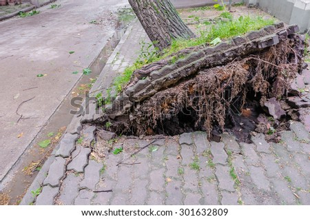 Trees were uprooted after the hurricane - stock photo