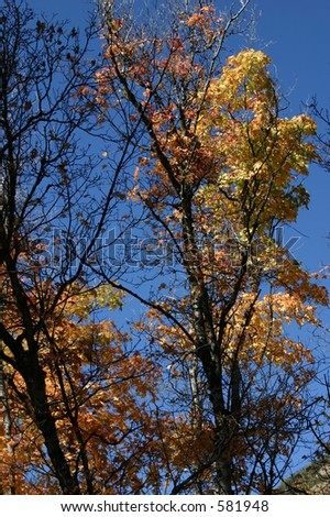 Trees with Blue Sky - 742