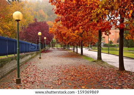Trees with colorful foliage growing along sidewalk covered with fallen autumn leaves in Alba, Italy. - stock photo