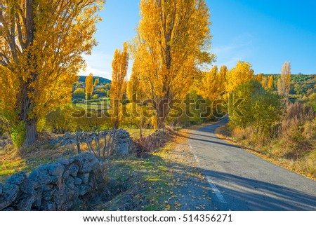 Trees with colorful  yellow autumn leaves in sunlight
