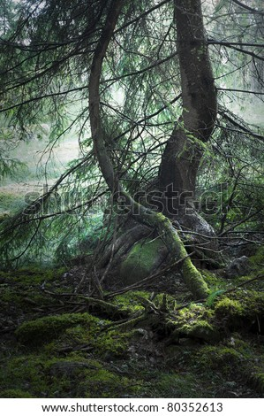 trees with moss in magic light and haze in background - stock photo