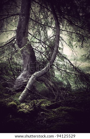 trees with moss with dark spooky feeling - stock photo