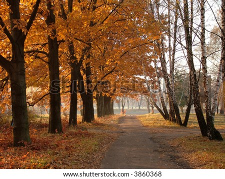 Trees with red-yellow leaves and easy fog
