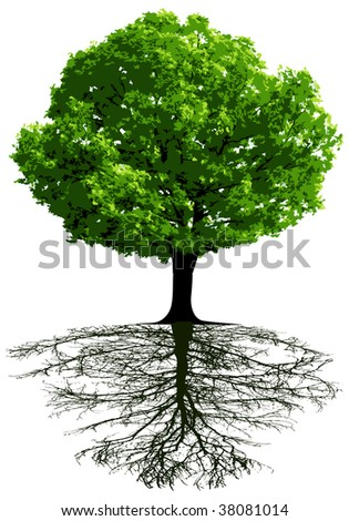Trees with roots - stock photo