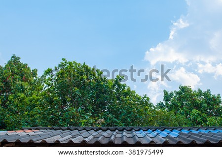 trees with sky.background - stock photo